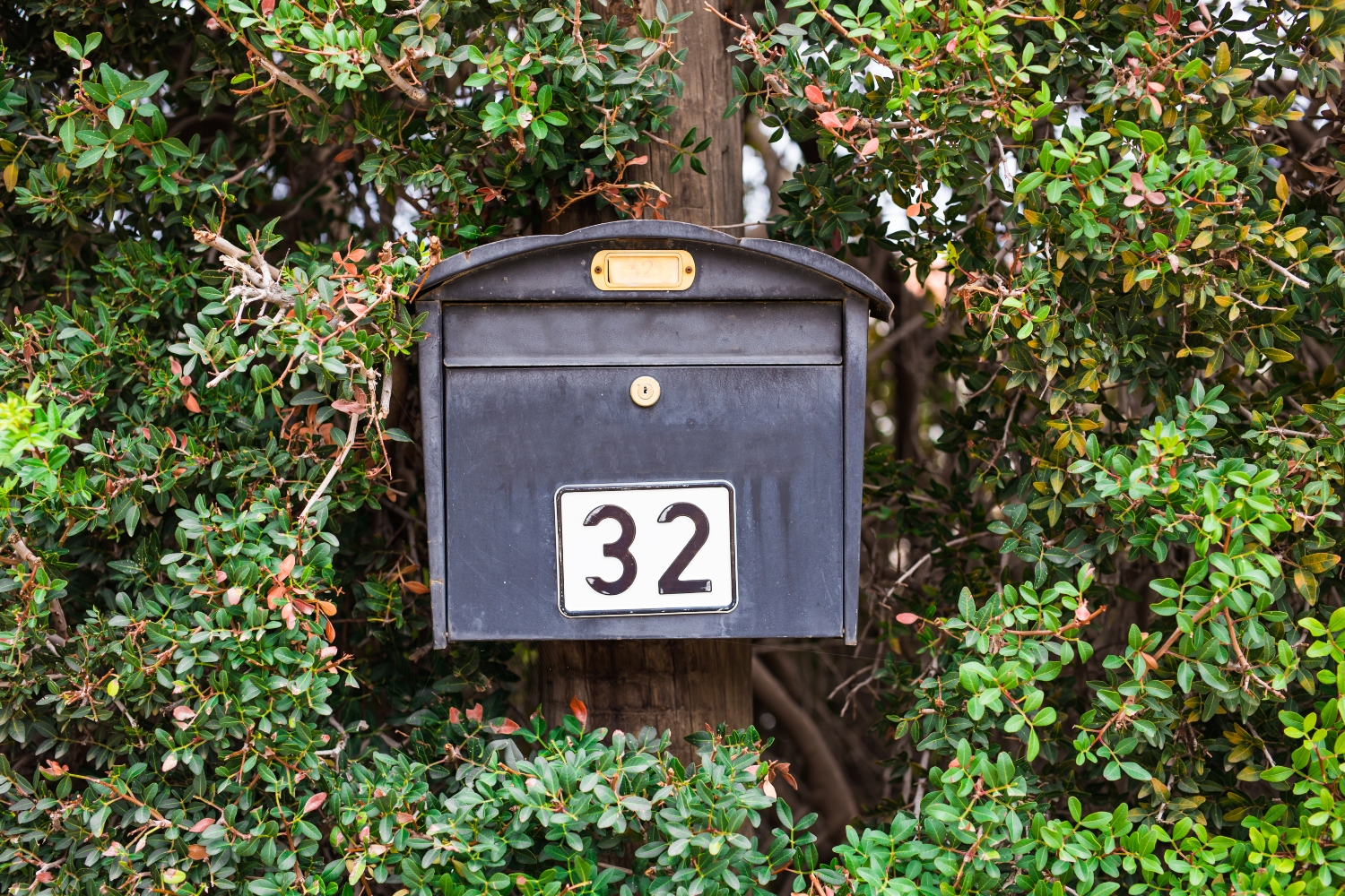 5 Reasons Why Direct Mail Isn't Dead