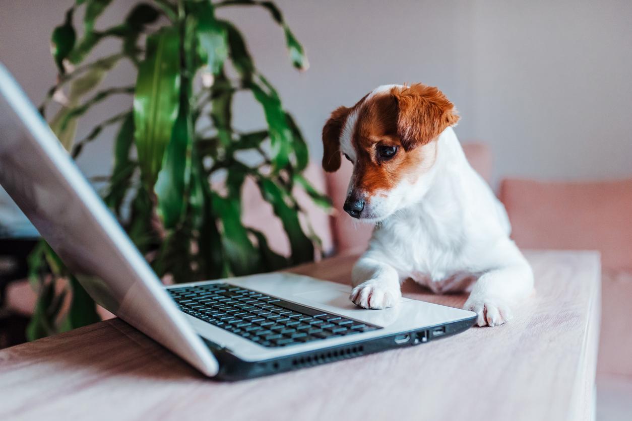 Pet Tech: Gadgets To Help Improve Your Pets' Lives